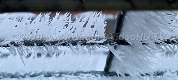 Hoarfrost Needles on Fence Ice needles grew in supersaturated fog at below freezing temperatures the prior nigh